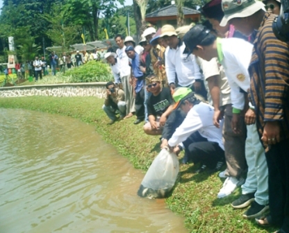 pelepasan ikan ke dalam danau